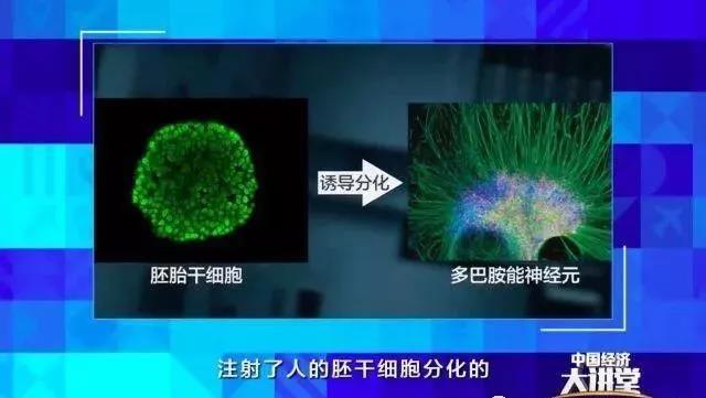 干细胞治疗, 究竟能为我们带来啥?